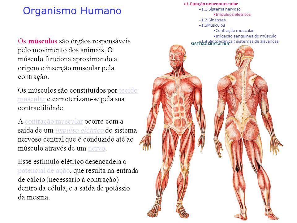 1.Função neuromuscular1.1 Sistema nervoso. Impulsos elétricos. 1.2 Sinapses. 1.3Músculos. Contração muscular.