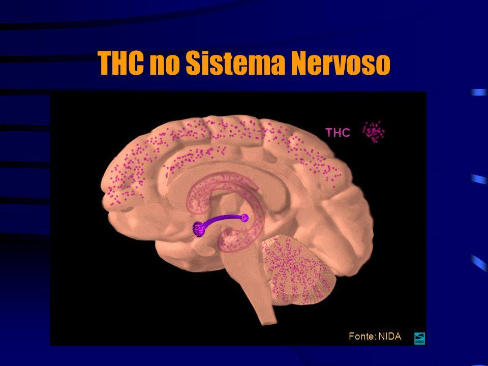THC no Sistema Nervoso Fonte: NIDA