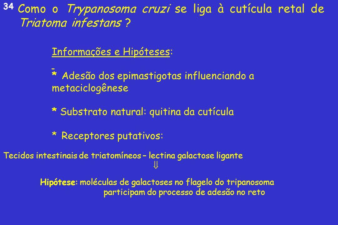 Parasitoses transmitidas pela água um problema de saúde publica 2