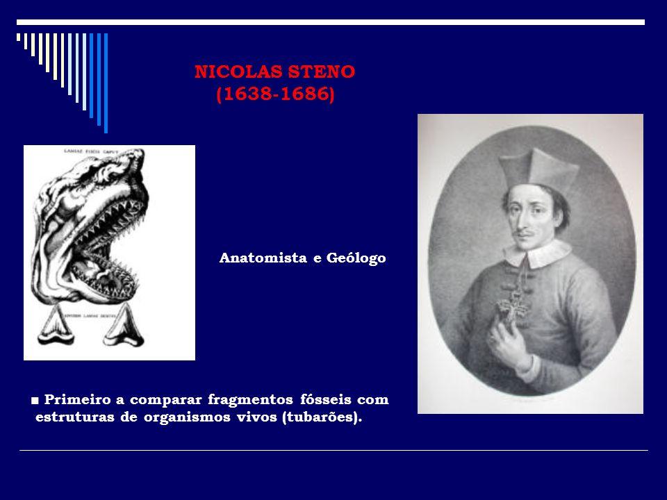 NICOLAS STENO (1638-1686) Anatomista e Geólogo
