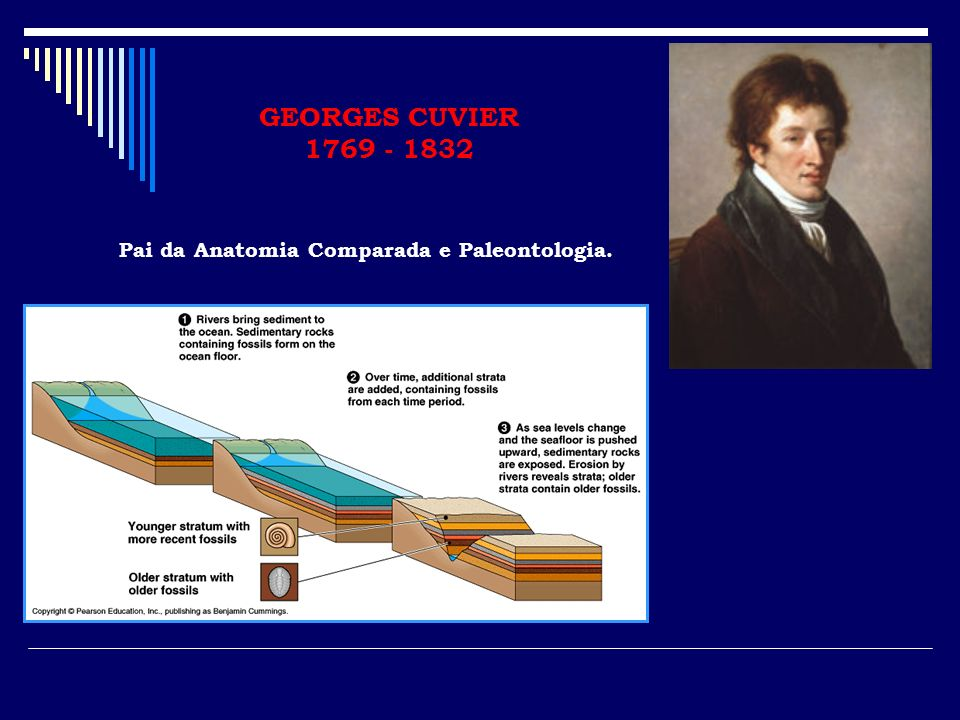 GEORGES CUVIER 1769 - 1832 Pai da Anatomia Comparada e Paleontologia.