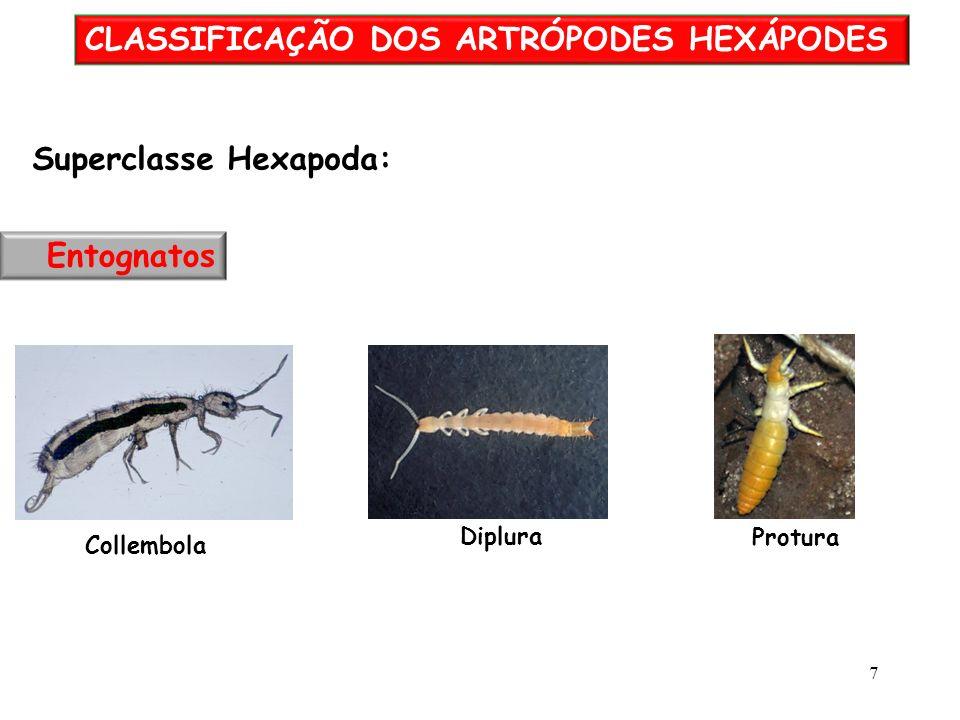 CLASSIFICAÇÃO DOS ARTRÓPODES HEXÁPODES