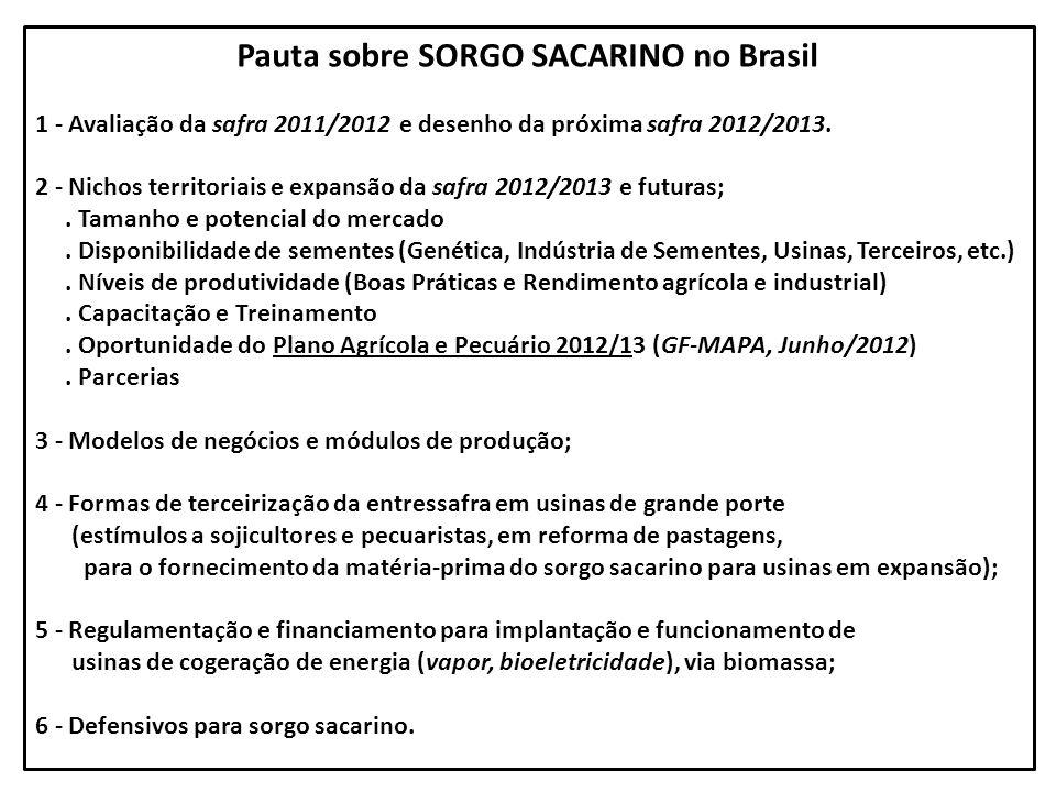 Pauta sobre SORGO SACARINO no Brasil