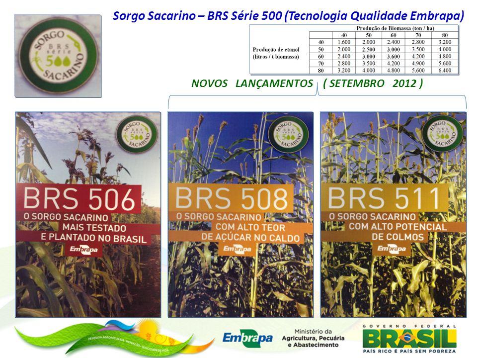 Sorgo Sacarino – BRS Série 500 (Tecnologia Qualidade Embrapa)