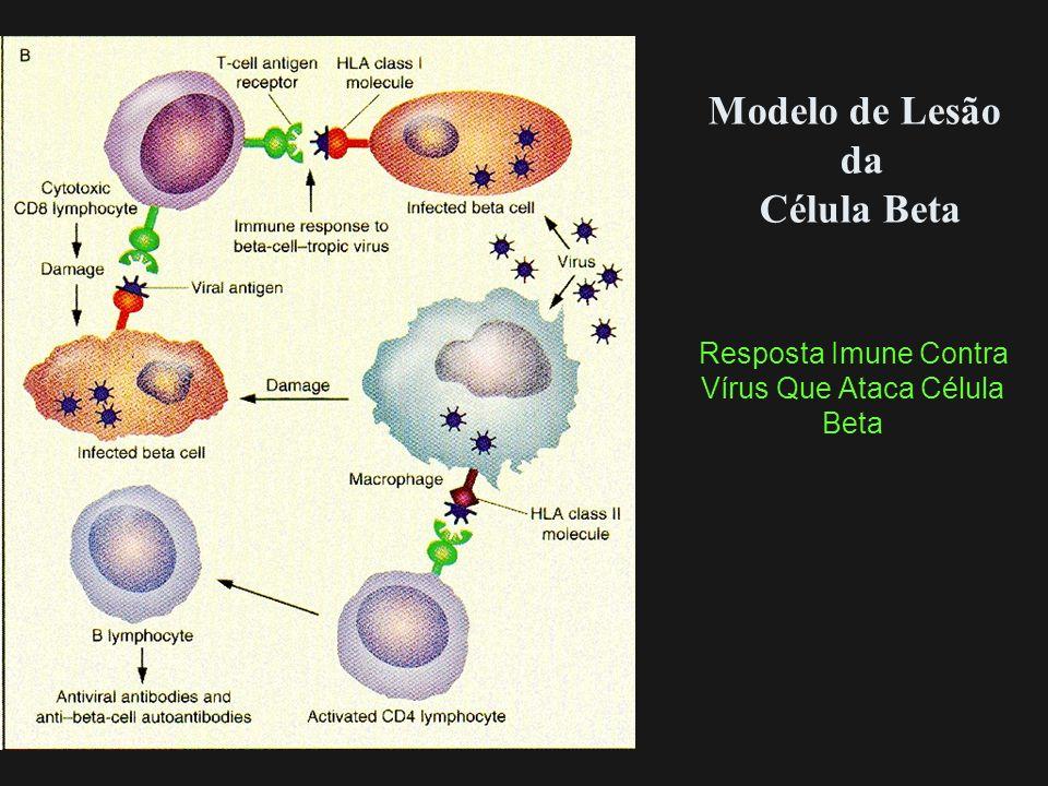 Modelo de Lesão da Célula Beta Resposta Imune Contra