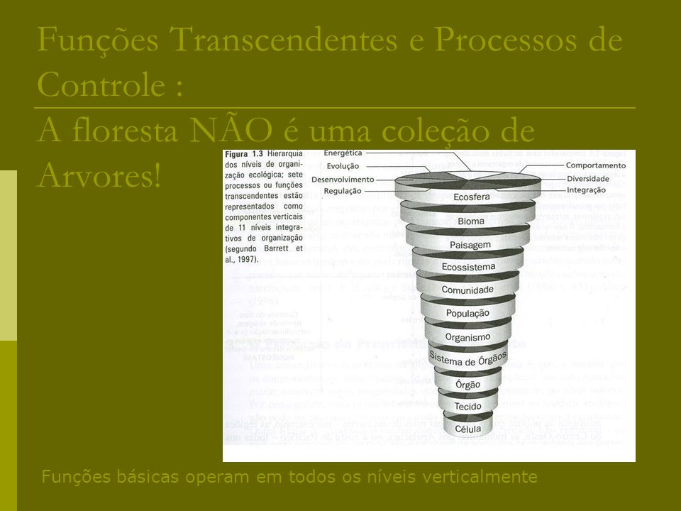 Funções Transcendentes e Processos de Controle : A floresta NÃO é uma coleção de Arvores!