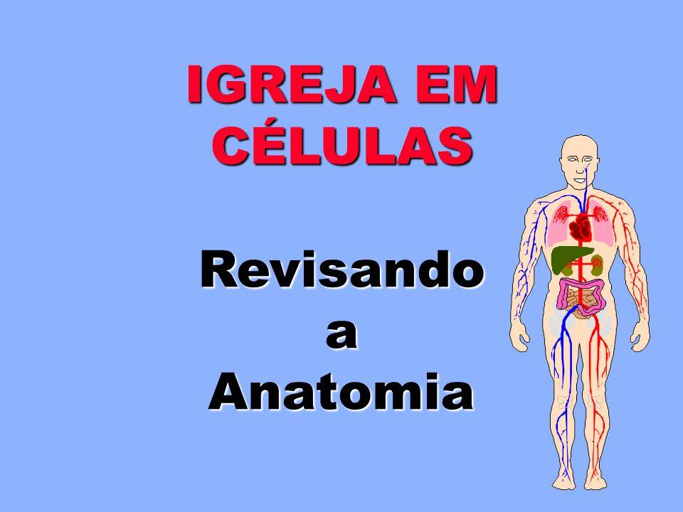 IGREJA EM CÉLULAS Revisando a Anatomia