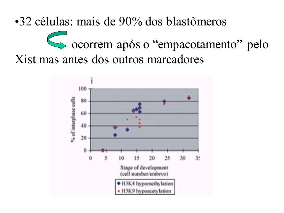 32 células: mais de 90% dos blastômeros