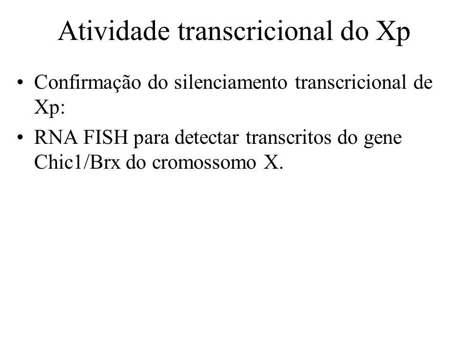 Atividade transcricional do Xp