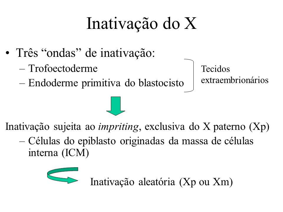 Inativação do X Três ondas de inativação: Trofoectoderme