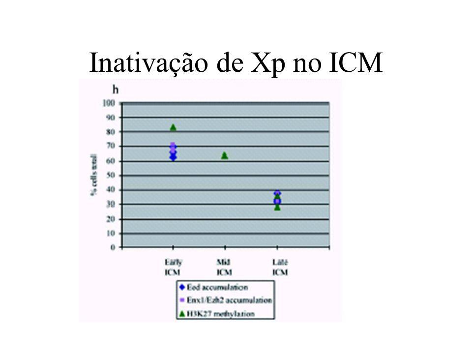 Inativação de Xp no ICM