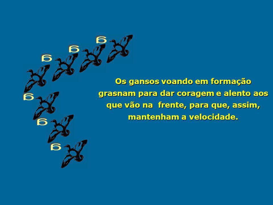 g g. g. Os gansos voando em formação grasnam para dar coragem e alento aos que vão na frente, para que, assim, mantenham a velocidade.