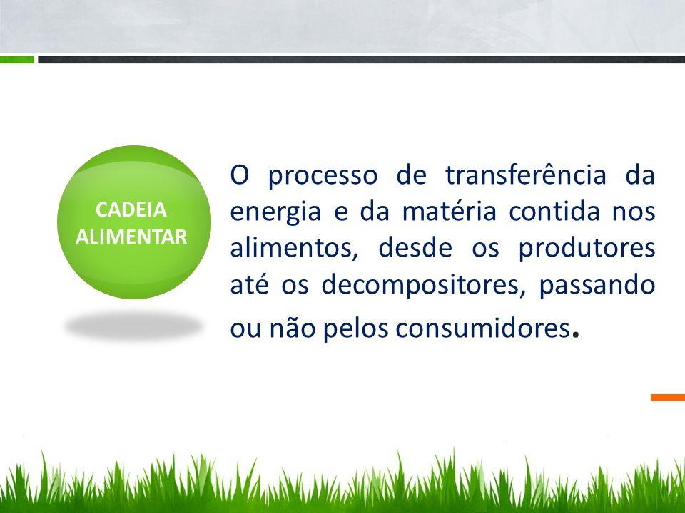 O processo de transferência da energia e da matéria contida nos alimentos, desde os produtores até os decompositores, passando ou não pelos consumidores.