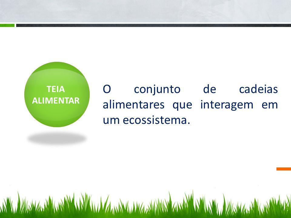 O conjunto de cadeias alimentares que interagem em um ecossistema.