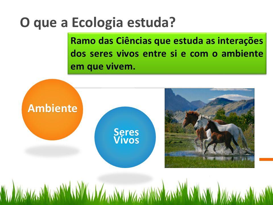 O que a Ecologia estuda Ambiente Seres Vivos