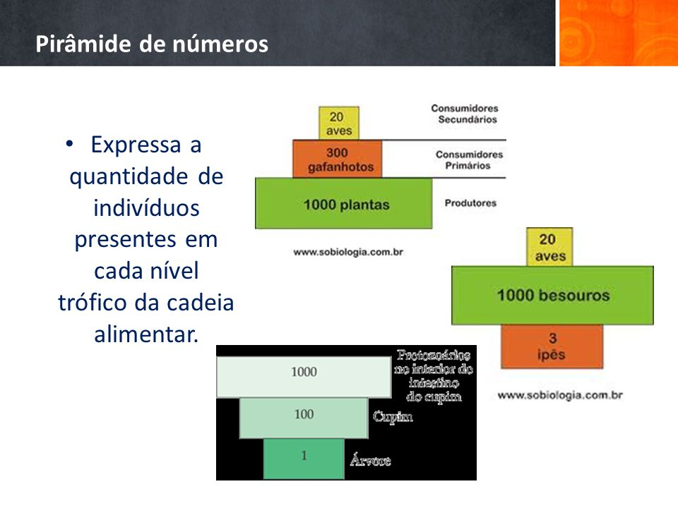 Pirâmide de númerosExpressa a quantidade de indivíduos presentes em cada nível trófico da cadeia alimentar.