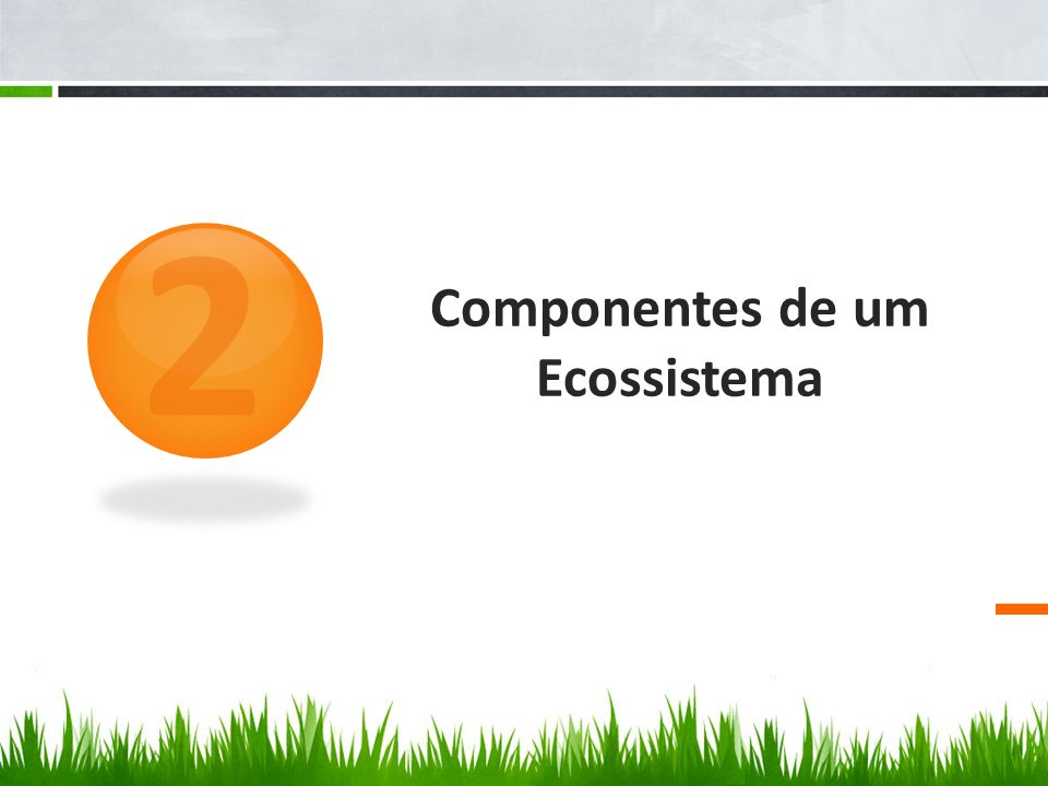 Componentes de um Ecossistema