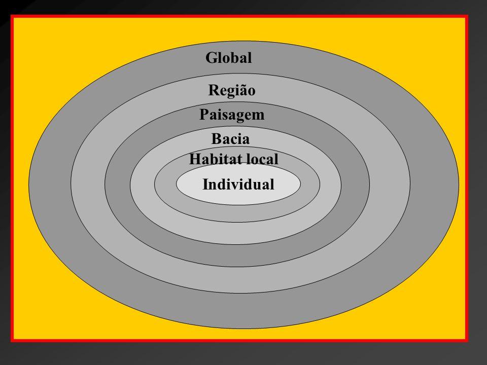 Global Região Paisagem Bacia Habitat local Individual