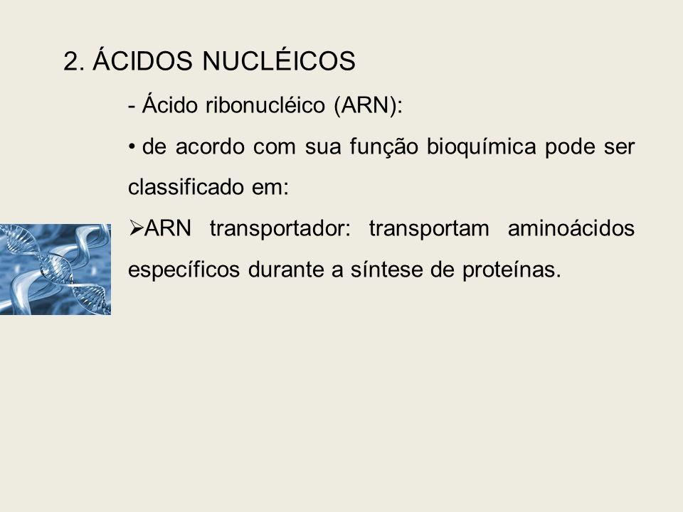 2. ÁCIDOS NUCLÉICOS Ácido ribonucléico (ARN):