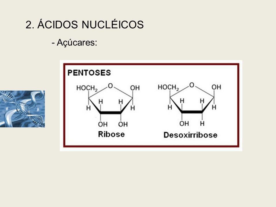 2. ÁCIDOS NUCLÉICOS Açúcares:
