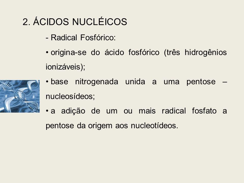 2. ÁCIDOS NUCLÉICOS Radical Fosfórico: