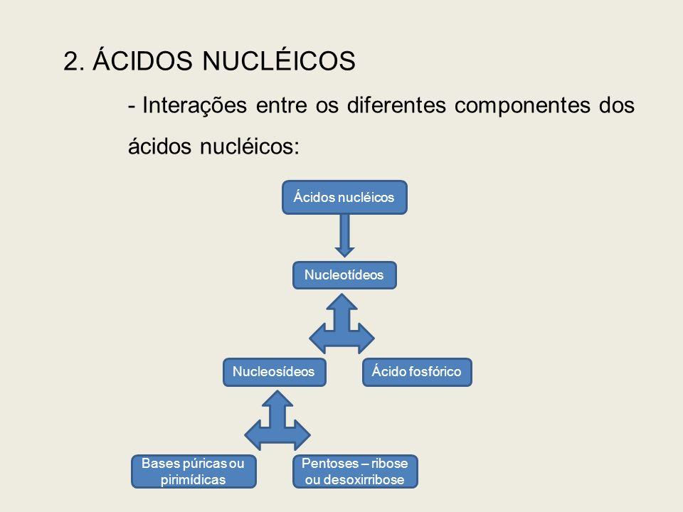 2. ÁCIDOS NUCLÉICOS Interações entre os diferentes componentes dos ácidos nucléicos: Ácidos nucléicos.