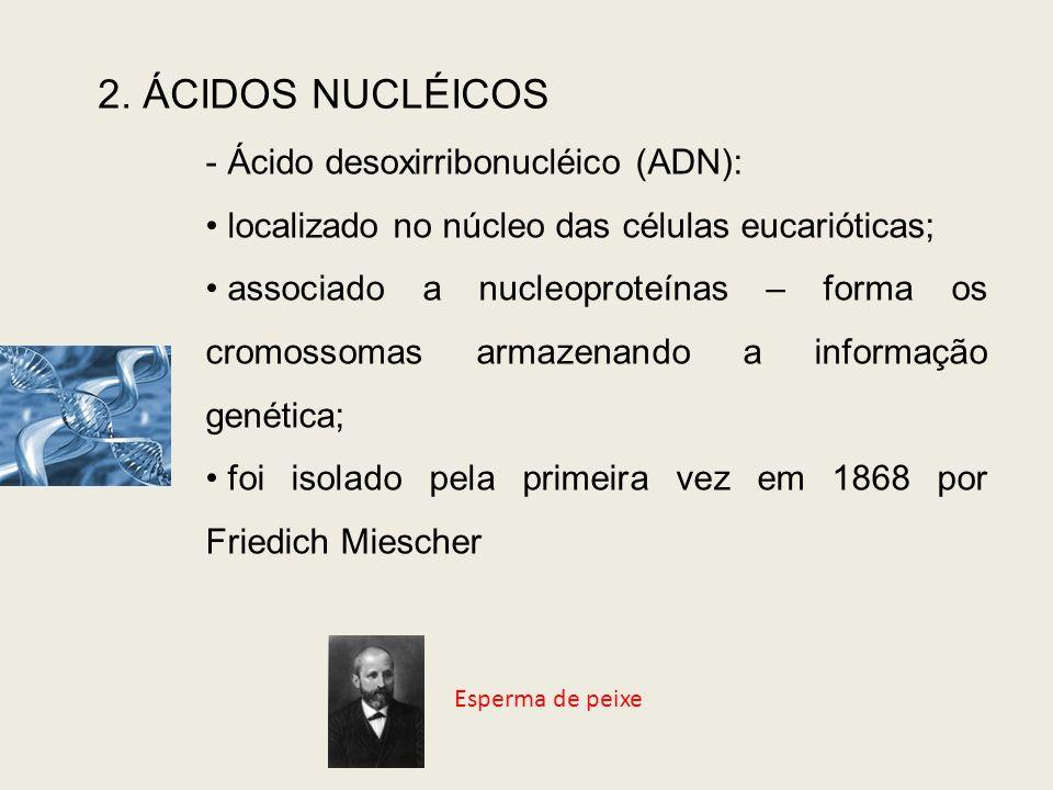 2. ÁCIDOS NUCLÉICOS Ácido desoxirribonucléico (ADN):