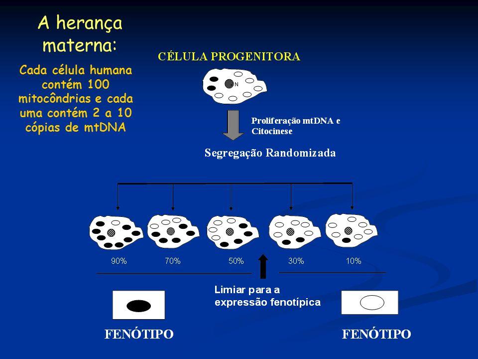 A herança materna:Cada célula humana contém 100 mitocôndrias e cada uma contém 2 a 10 cópias de mtDNA.