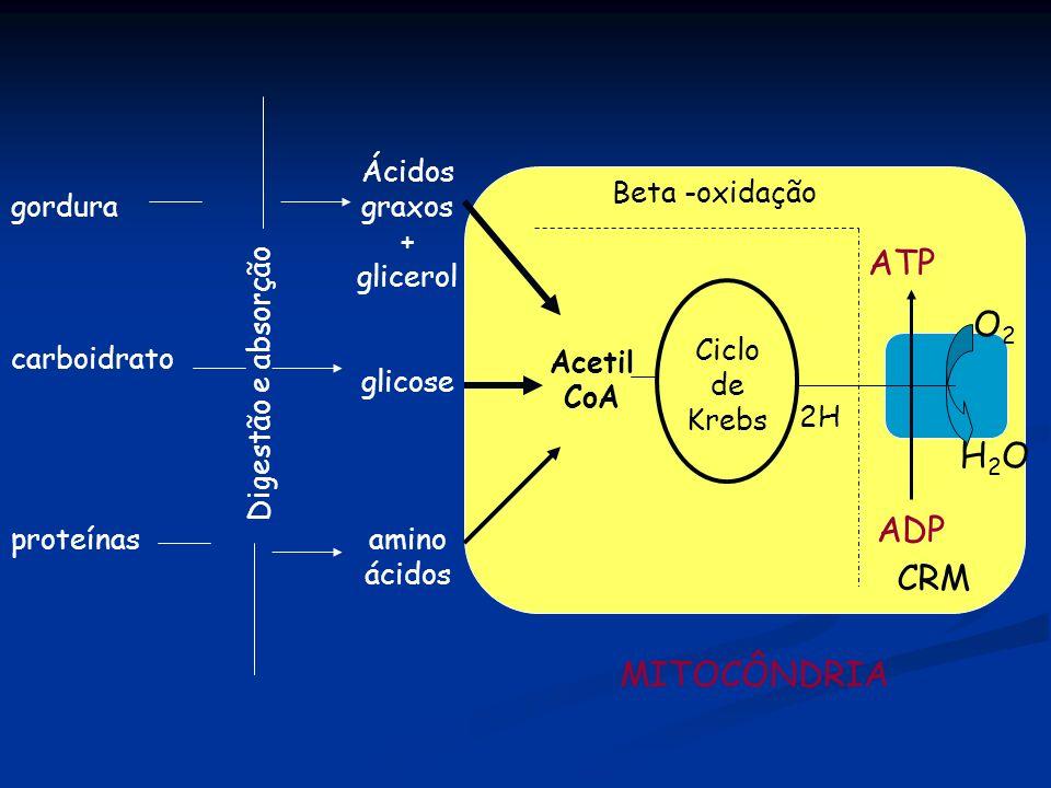 Ácidos graxos + glicerol