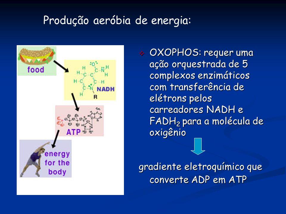 Produção aeróbia de energia:
