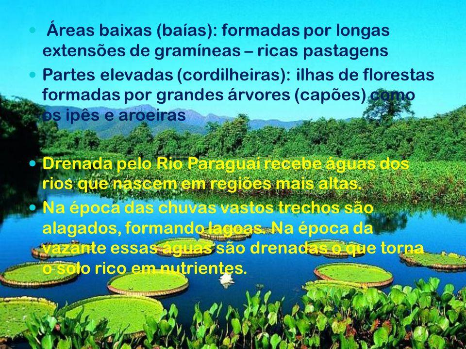 Áreas baixas (baías): formadas por longas extensões de gramíneas – ricas pastagens