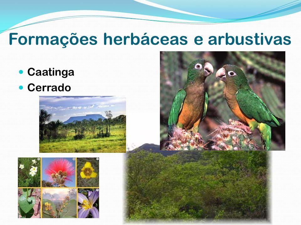 Formações herbáceas e arbustivas