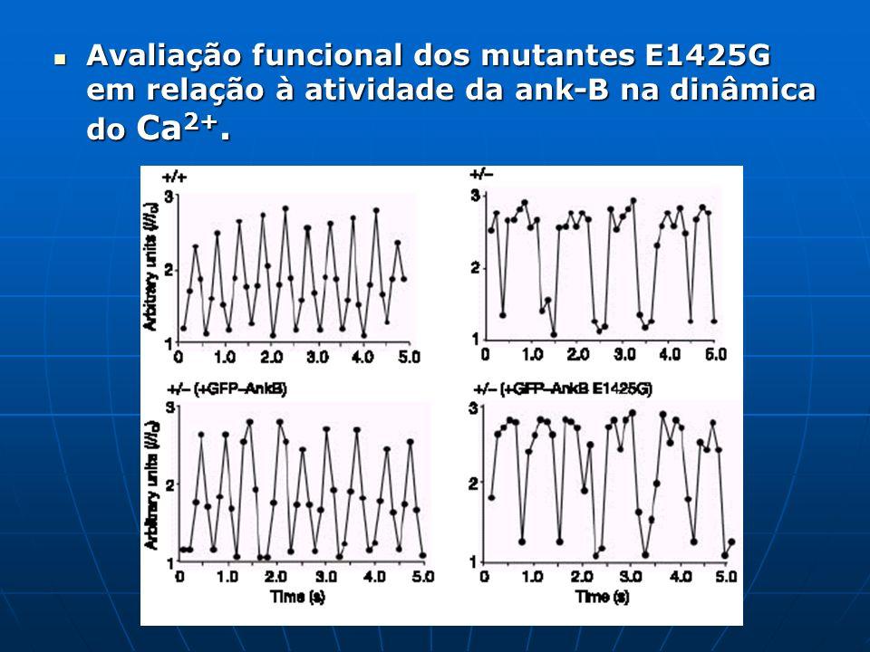 Avaliação funcional dos mutantes E1425G em relação à atividade da ank-B na dinâmica do Ca2+.