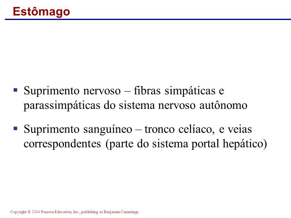 EstômagoSuprimento nervoso – fibras simpáticas e parassimpáticas do sistema nervoso autônomo.