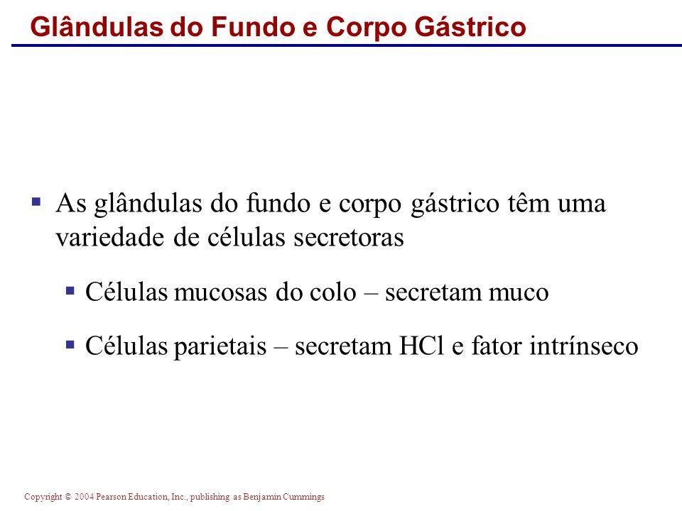 Glândulas do Fundo e Corpo Gástrico