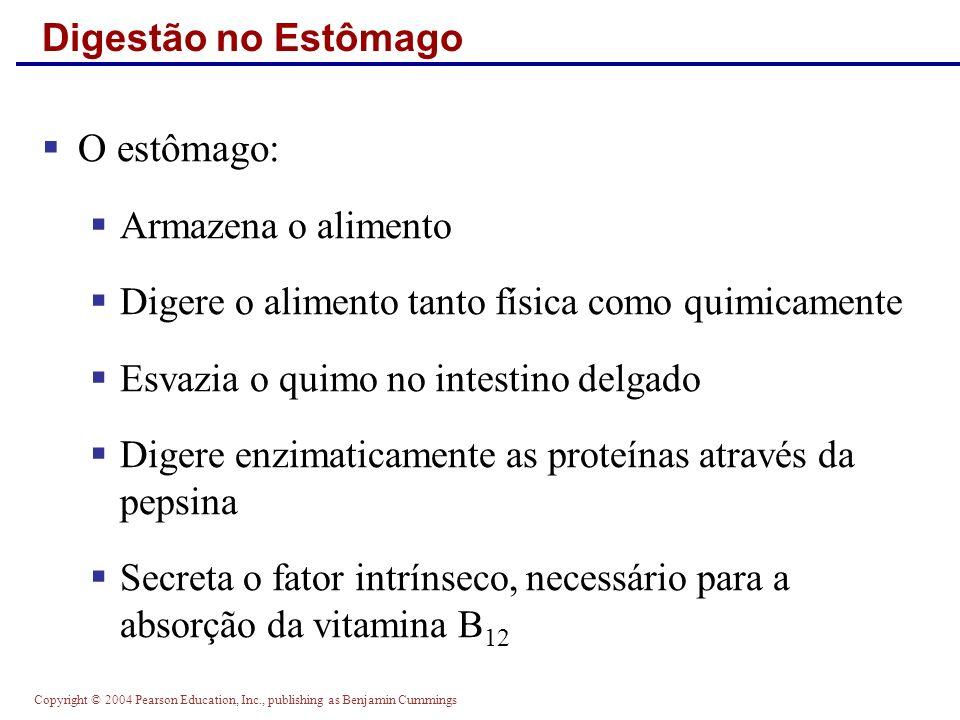 O estômago: Digestão no Estômago Armazena o alimento