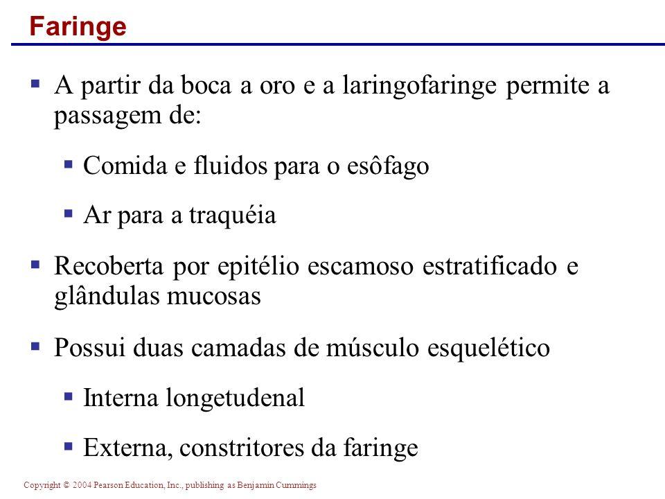 A partir da boca a oro e a laringofaringe permite a passagem de: