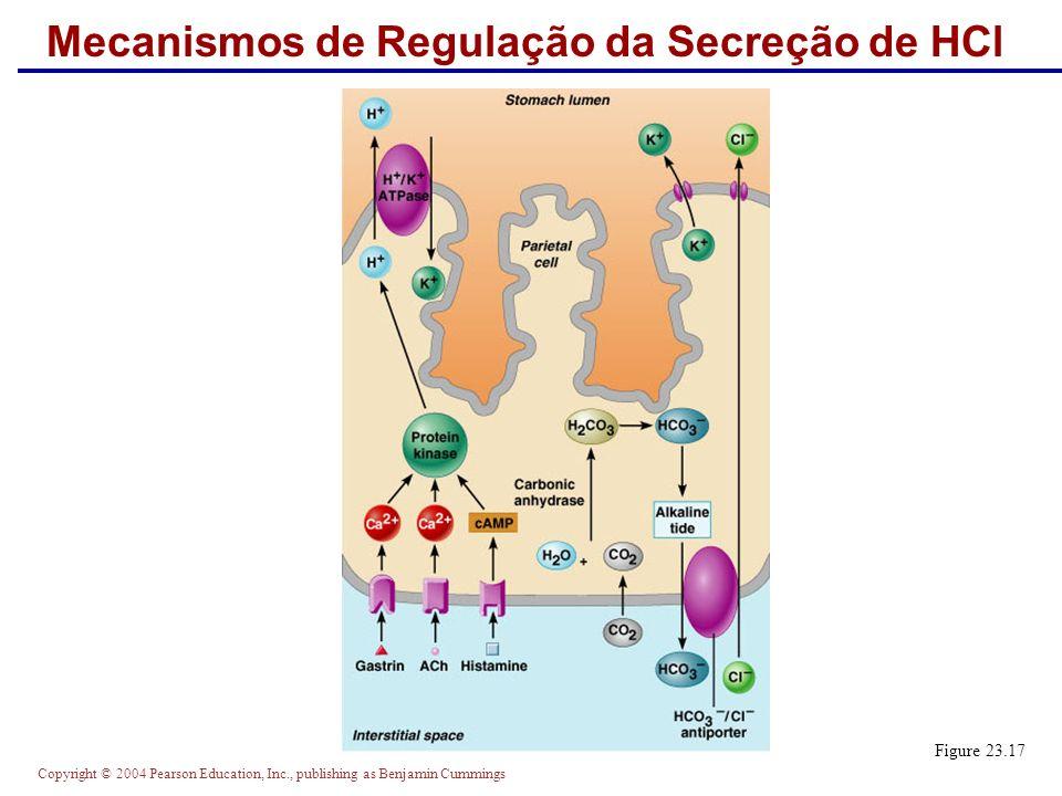Mecanismos de Regulação da Secreção de HCl