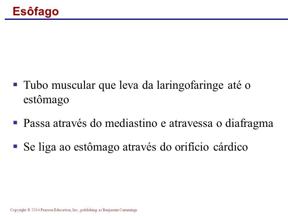 Tubo muscular que leva da laringofaringe até o estômago