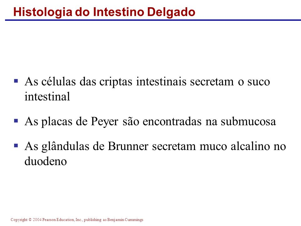 Histologia do Intestino Delgado