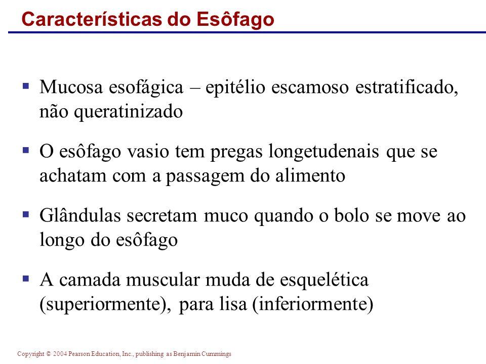 Características do Esôfago