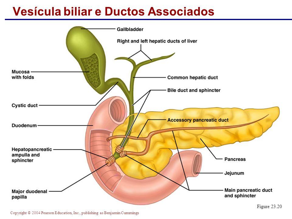 Vesícula biliar e Ductos Associados