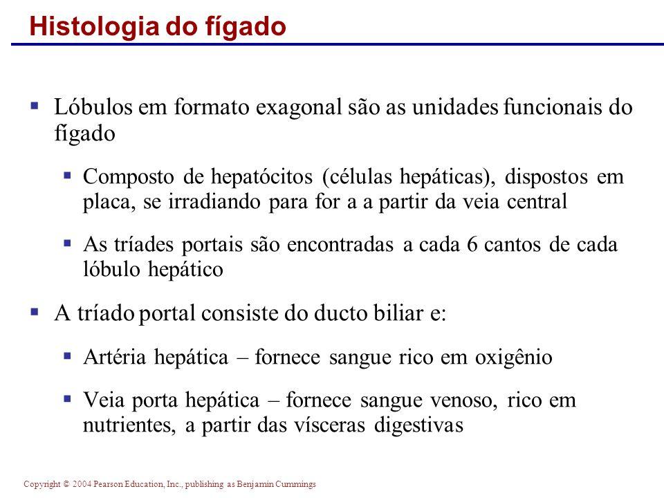 Histologia do fígado Lóbulos em formato exagonal são as unidades funcionais do fígado.