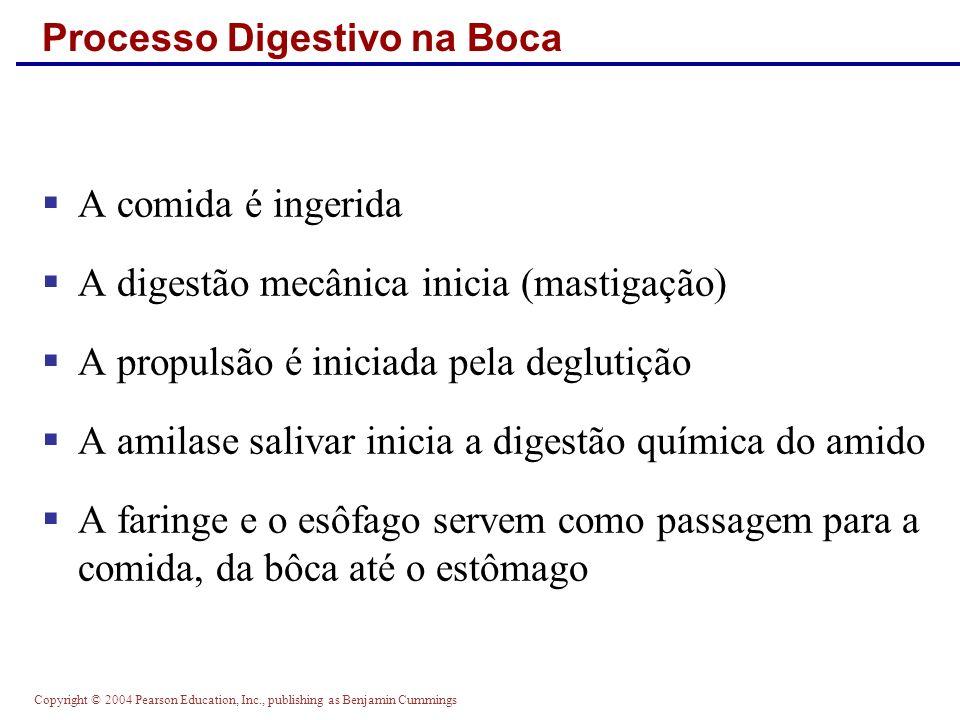 Processo Digestivo na Boca