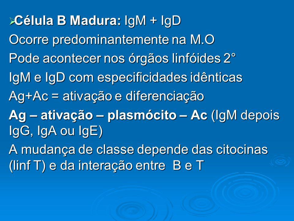 Célula B Madura: IgM + IgD