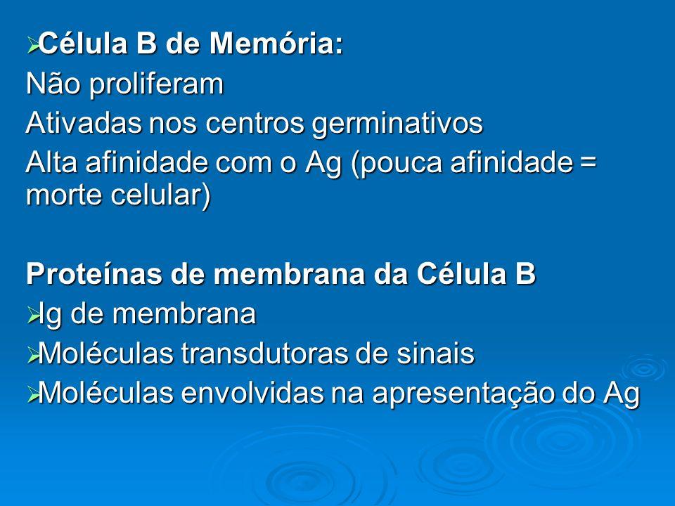 Célula B de Memória:Não proliferam. Ativadas nos centros germinativos. Alta afinidade com o Ag (pouca afinidade = morte celular)