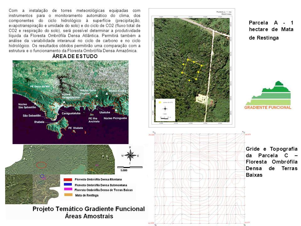 Parcela A - 1 hectare de Mata de Restinga