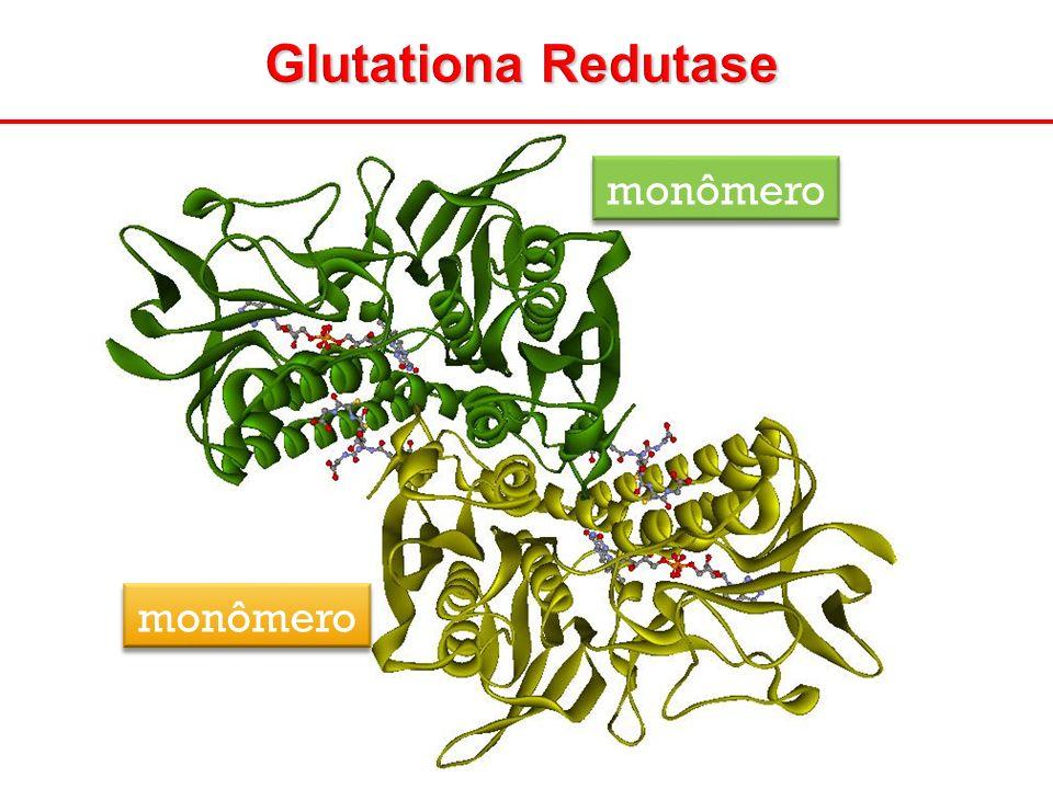 Glutationa Redutase monômero monômero