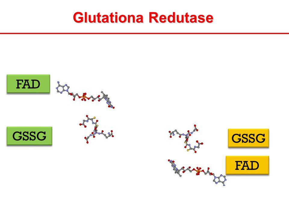 Glutationa Redutase FAD GSSG GSSG FAD