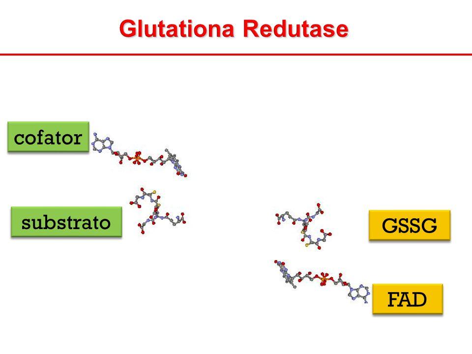 Glutationa Redutase cofator substrato GSSG FAD